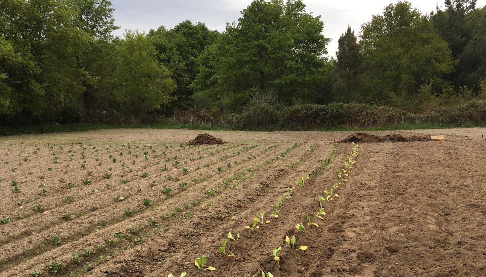Explotacións ecolóxicas fan uso do compost producido en Allariz
